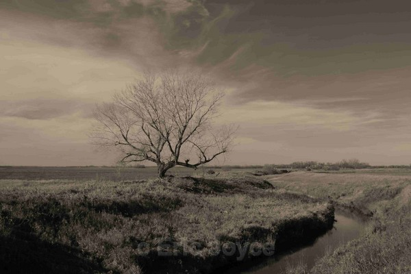 Prairie View - Nature