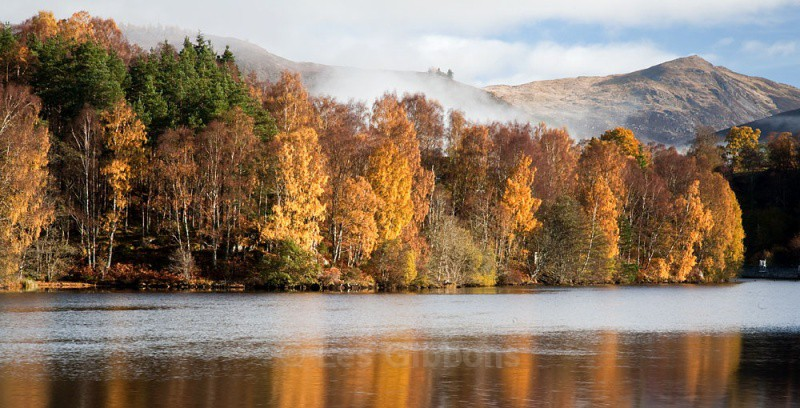 Loch Tummel trees4 - Perthshire