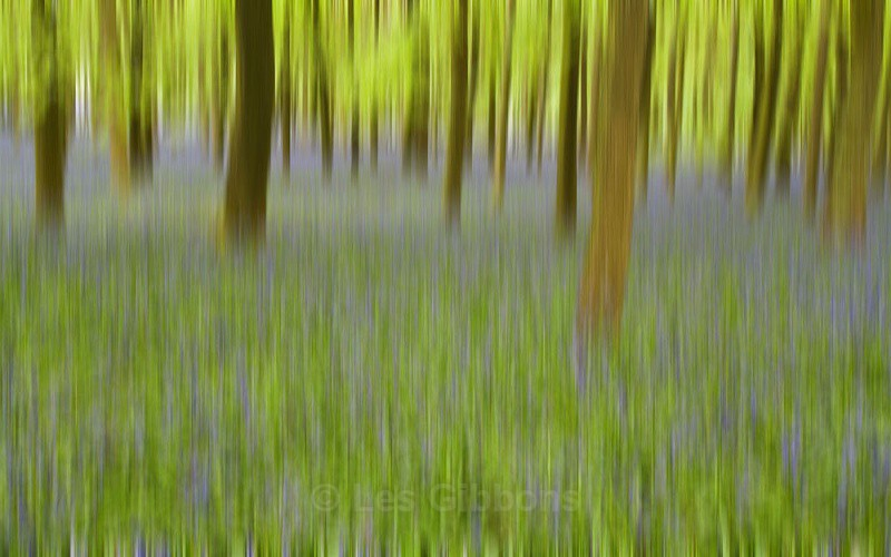 Dockey woods - blue blur - Ashridge estate