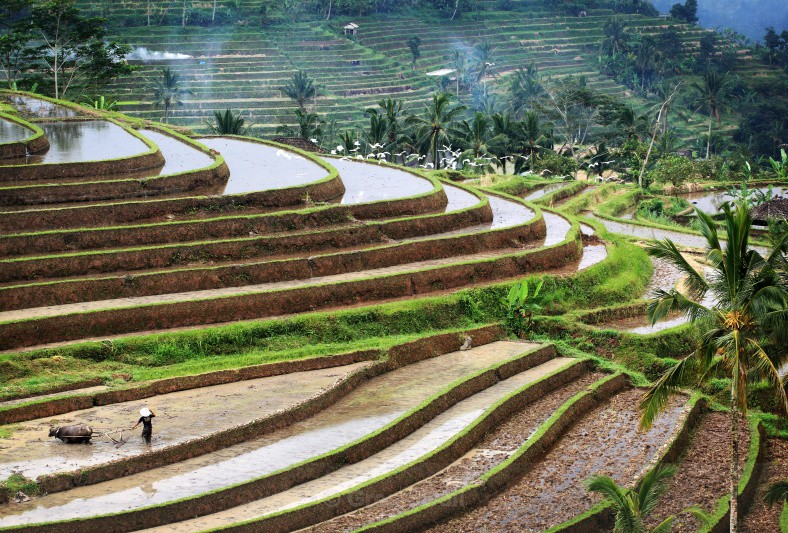 On the Turn - Bali's Lush Heartland