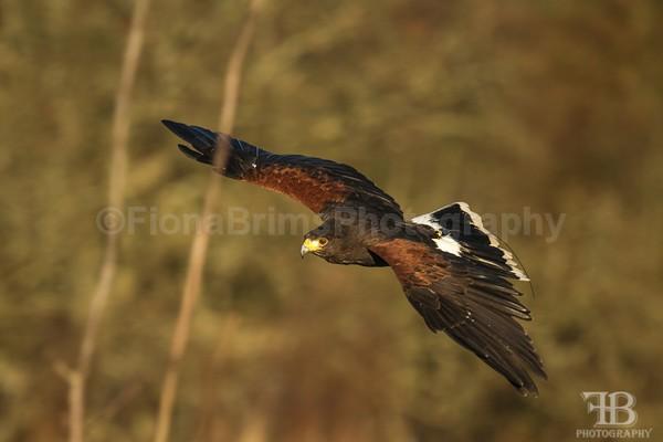 wow-40 - Birds of Prey