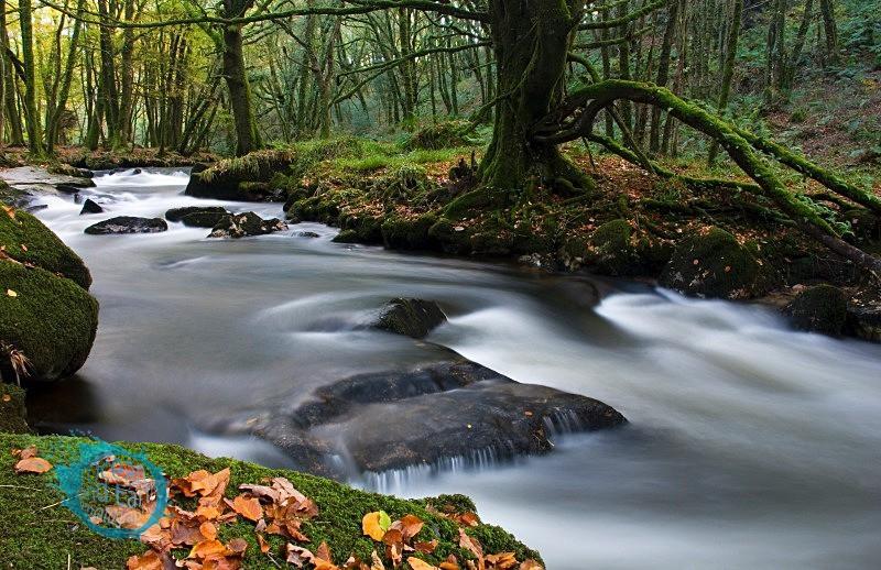 Woodland Realm - Landscapes