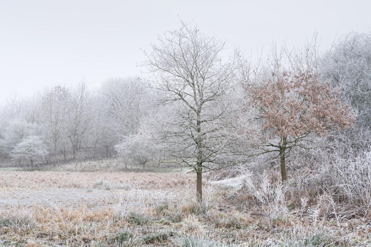 Gelid meadow - WINTER