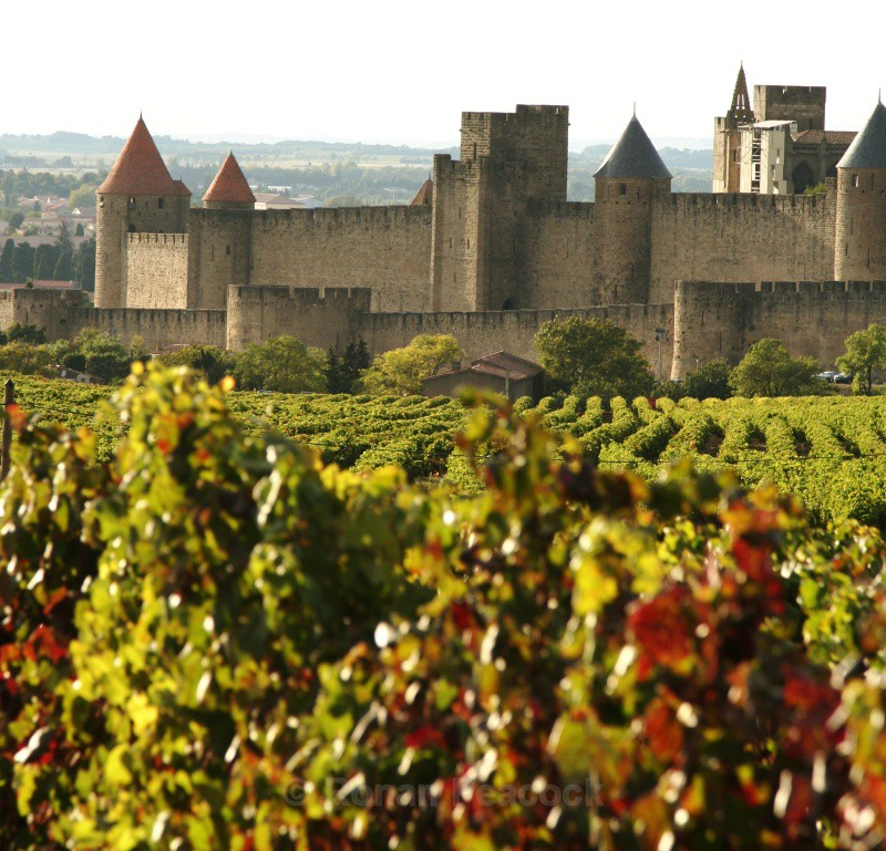 Vineyards outside Carcassonne - European Landscapes