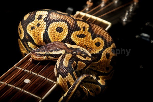 - Reptile Photography