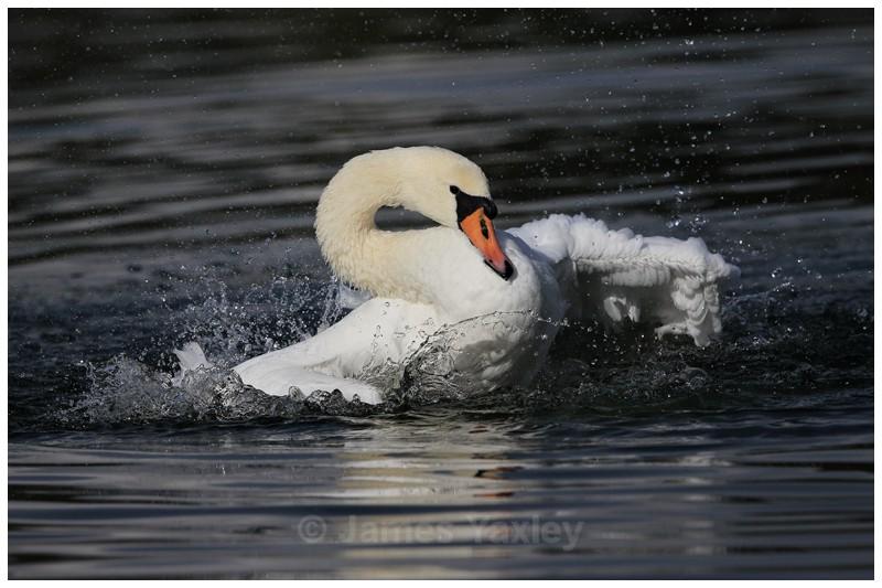 Bird Bath - River Scrape & Lake