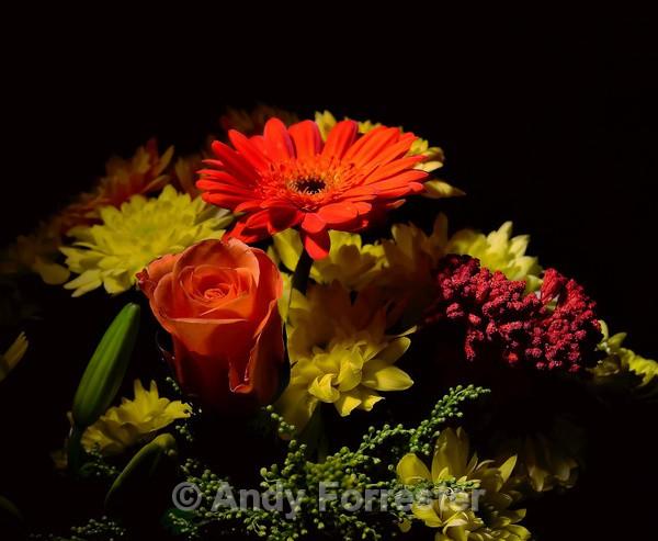 Orange Daisy Bouquet - Low Light Flowers