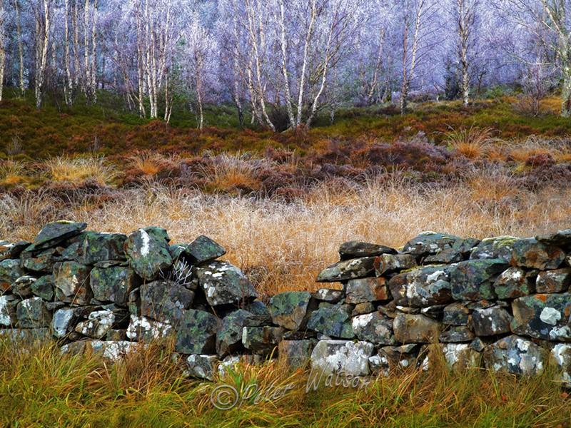 Near Tummel Bridge Perthshire Scotland - A Closer Look
