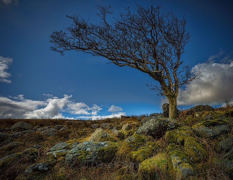 Lonesome Tree - Co. Waterford