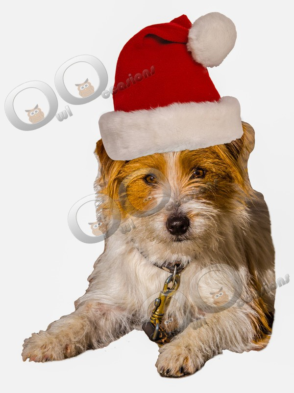 Christmas Terrier_5337 - Pet Photography