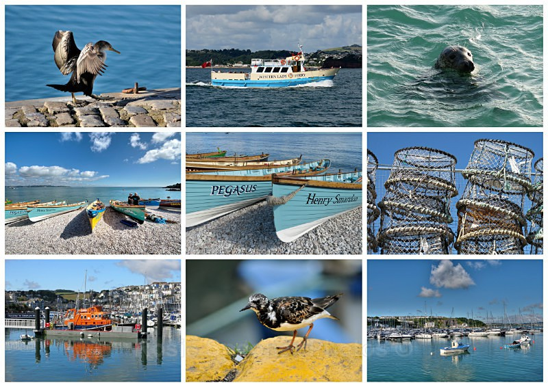 TQ96 - Boats lobster pots and wildlife around Brixham Harbour - Greetings Cards Brixham and Kingswear