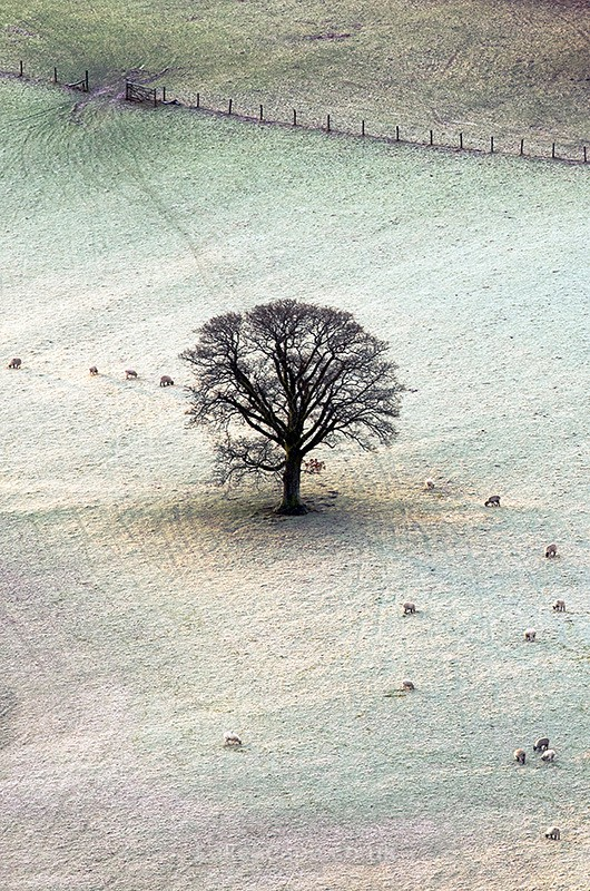 The Field 7537 - Trees
