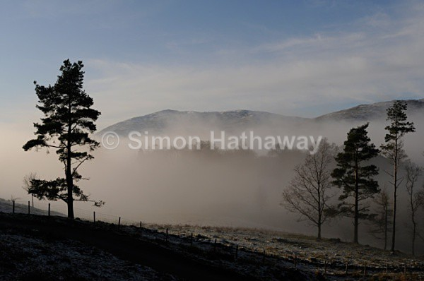 Away from the crowd - Trees on a misty morning at Tarn Hows - English Lake District