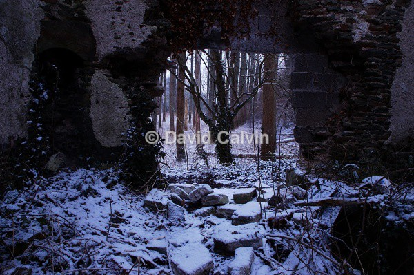 Woodland Ruin - Winter