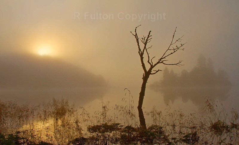 Misty Sunrise - Landscapes