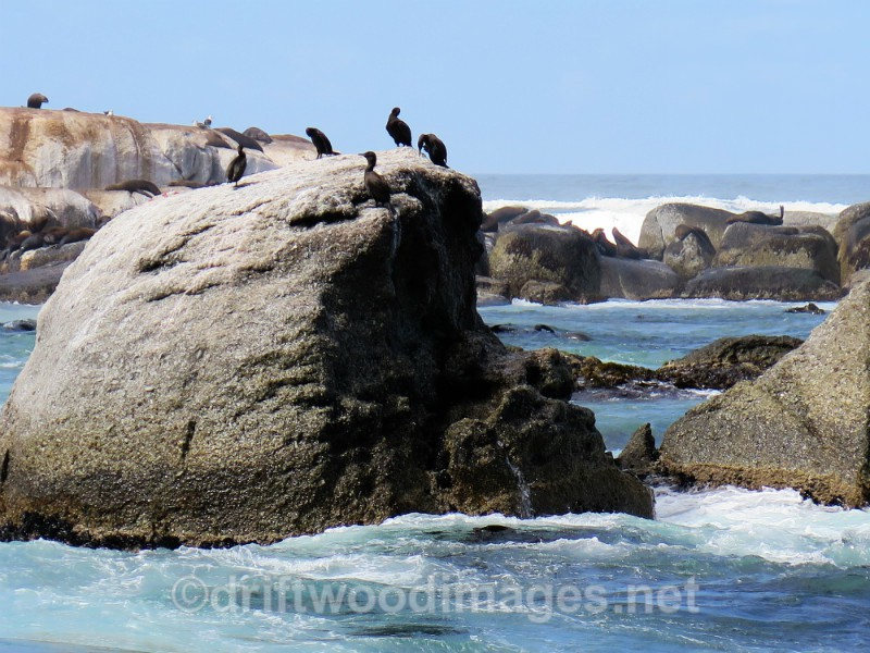 South Africa Cape Town Hout Bay granite rocks and cormorants - Cape Town, South Africa