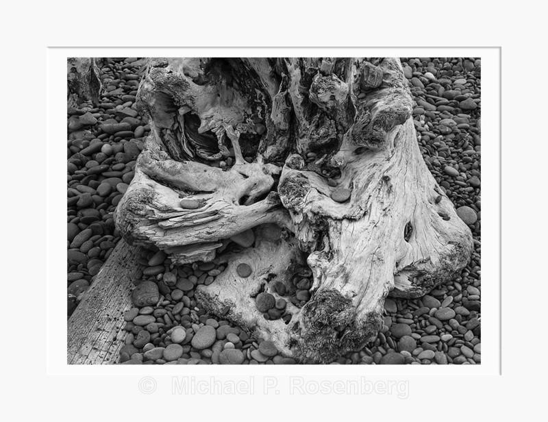 Driftwood 32, Rialto Beach WA (2014/D00632) - Pacific Coast