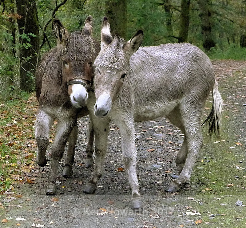 A donkey-welcome - Lake District Curiosities