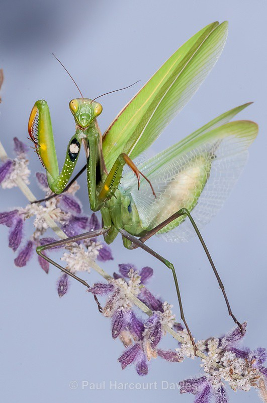 - Bugs: Macro insects