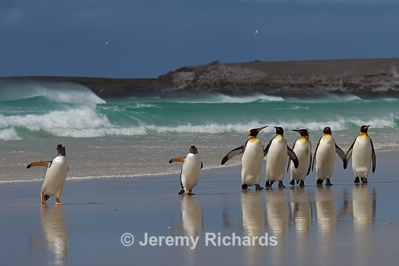 Penguin Beach - Volunteer Point