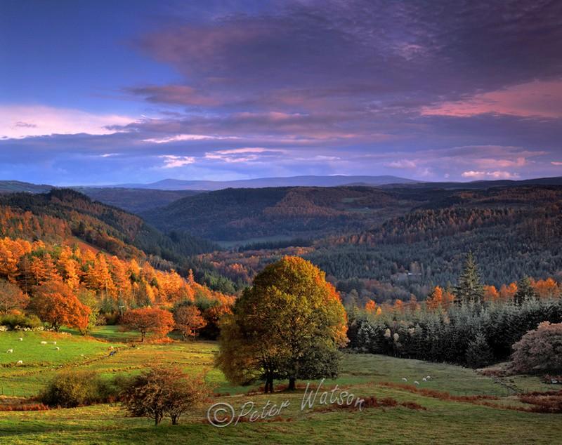 Gwydyr Forest Snowdonia - Wales