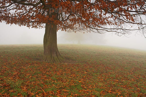 Autumn Mist - Peak District