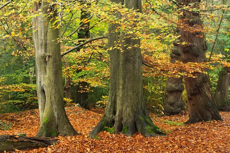 Autumnal Woodland | Autumn Leaves | Sheffield Photography