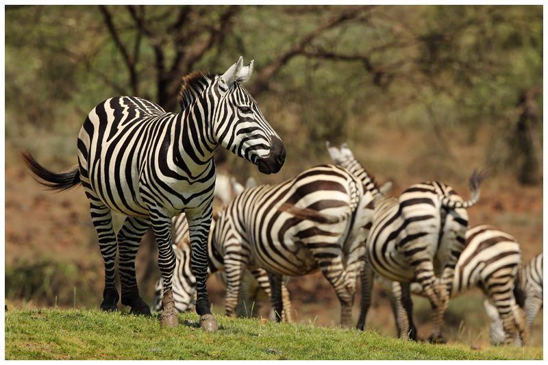 Harem - Kenyan Safari 2013