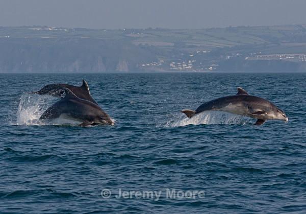 w3 - Welsh Wildlife p/c catalogue