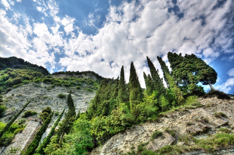 Cypress Trees - European Landscapes