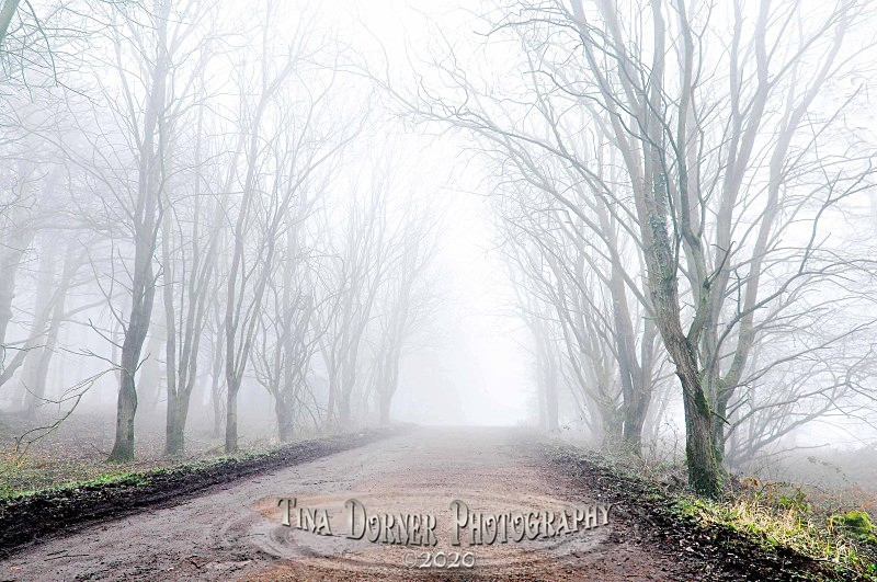 Lane in Mist.  Forest of Dean by Tina Dorner Photography, Forest of Dean and Wye Valley, Gloucestershire
