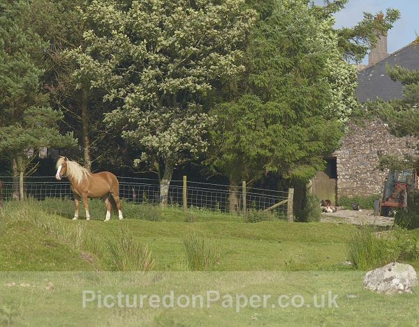 Farm Gate - Horses and Ponies