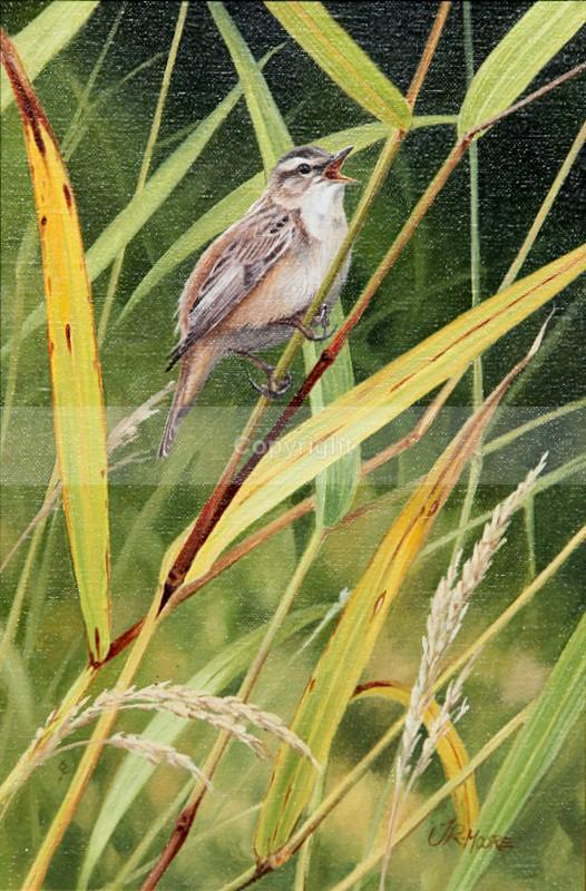 WARBLER - Birds
