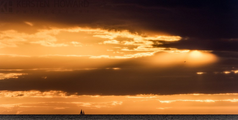 Free As A Bird - Parrog Newport - New Images
