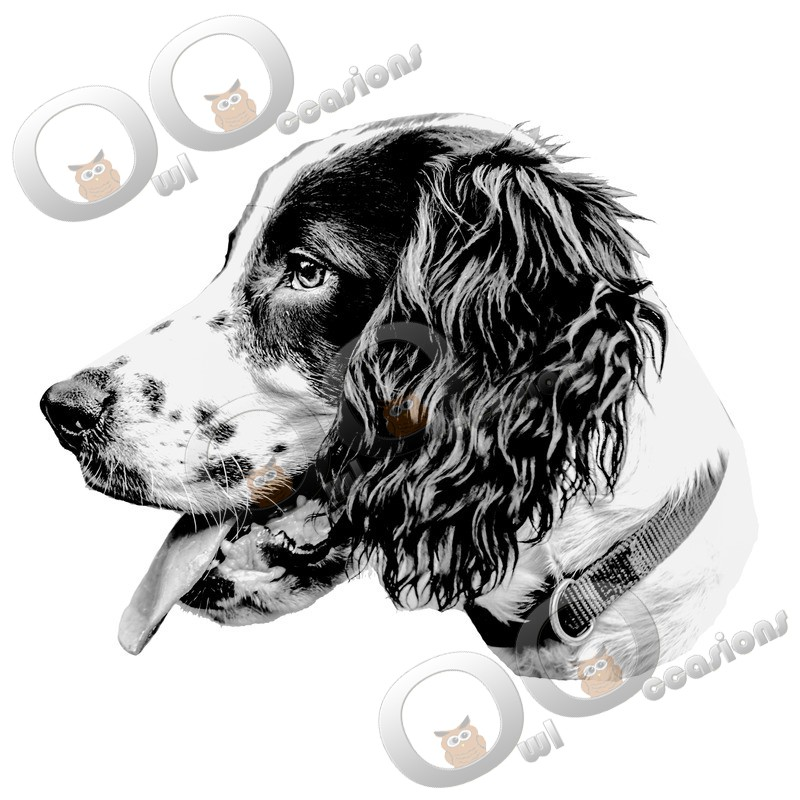 Springer Spaniel-85 - Pet Photography