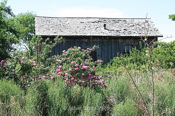 Stillwater Ranch House - Buildings