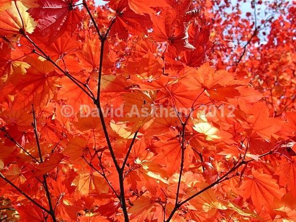 Autumn colour - Autumn