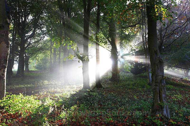 Woodland sunrays.   Croxdale near Durham   ref 9012 - County Durham