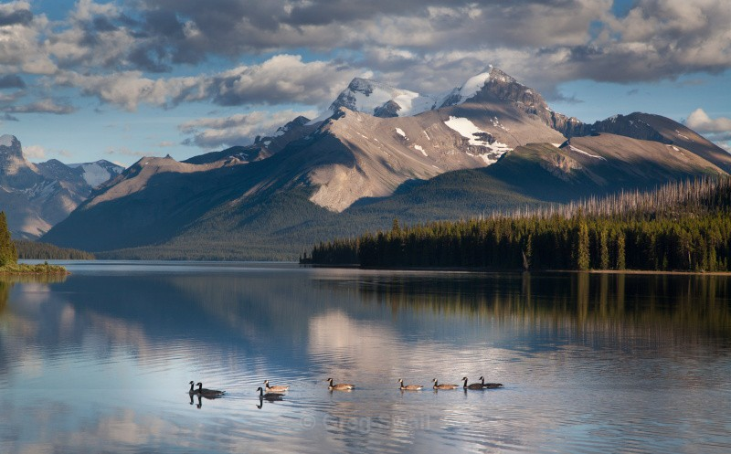Canada Geese - BC and the Rockies,Canada