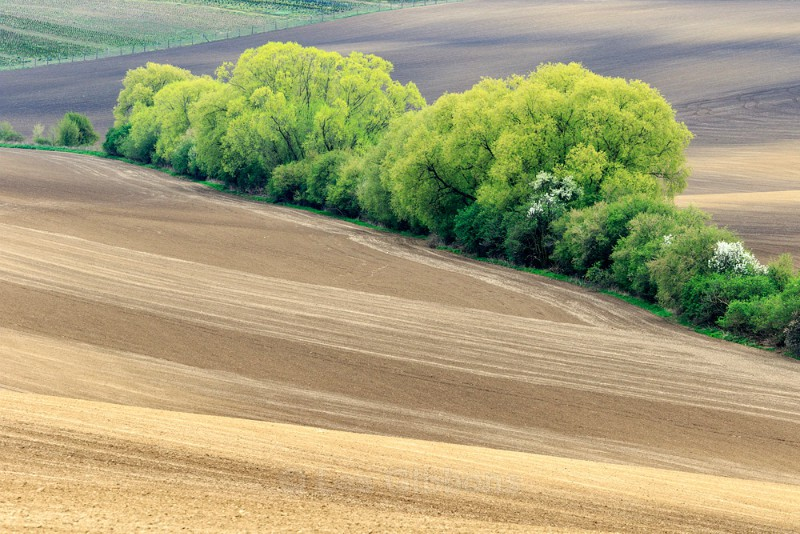 fields - Moravia