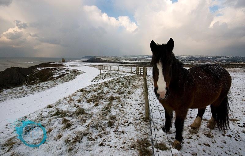 Winter Coat - Landscapes