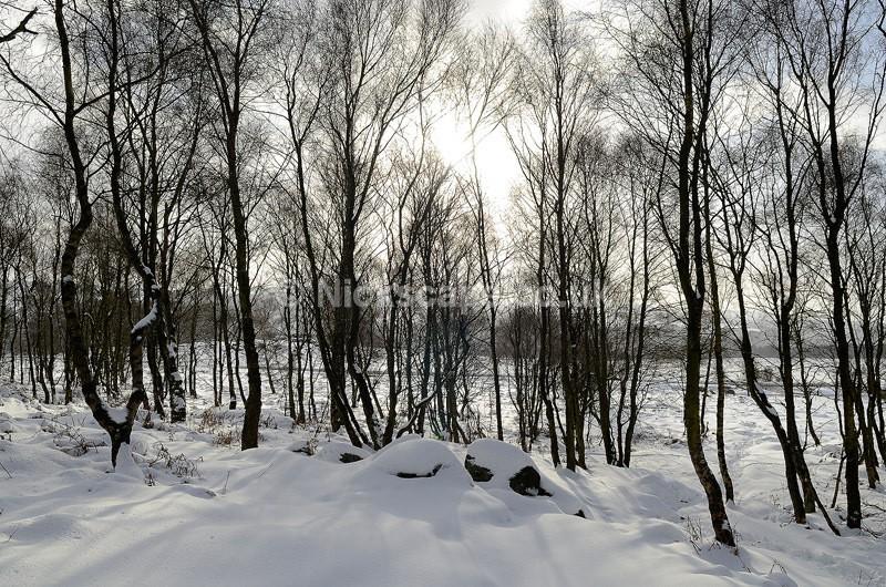 Surprise View Woodland Snow - Peak District, UK - Peak District Landscape Photography Gallery