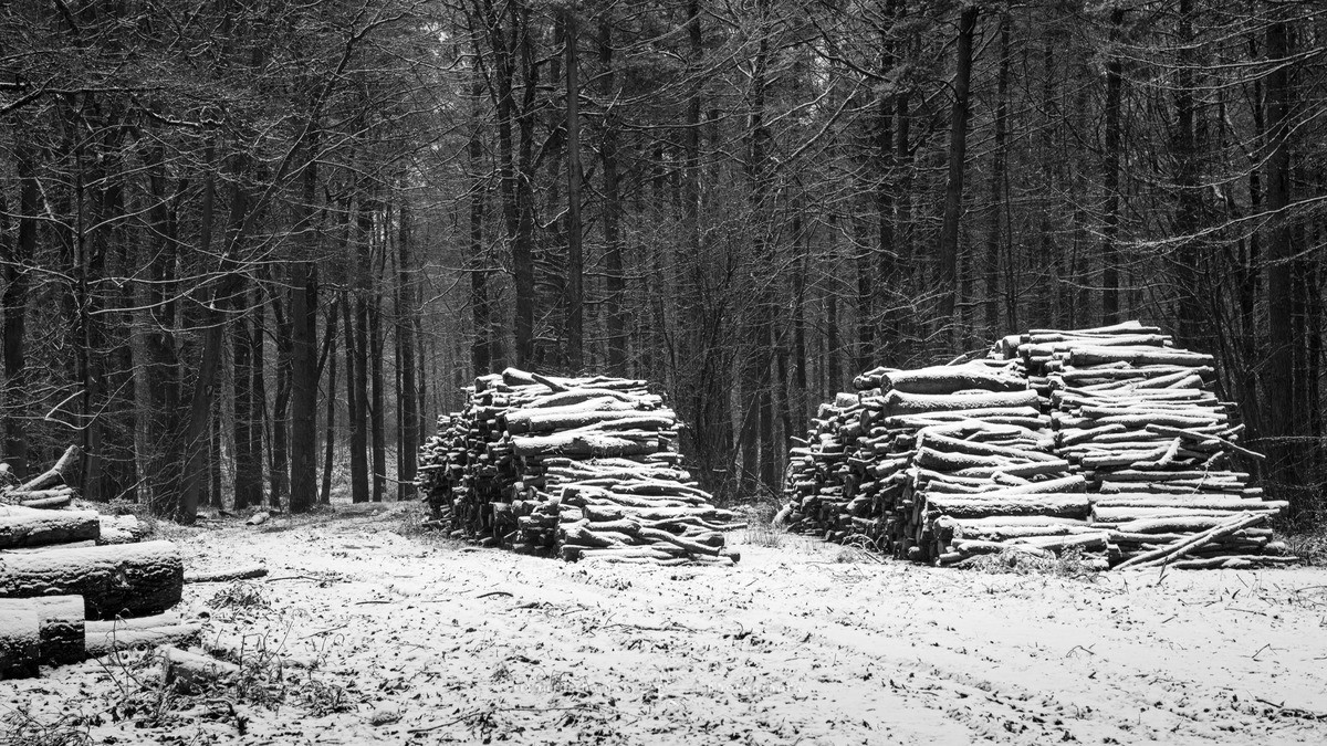 Snow covered log piles - WINTER