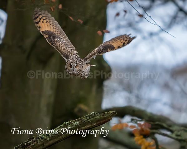 wow woodland walk-64 - Birds of Prey