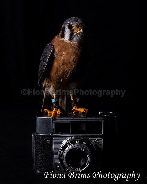 wow studio-16 - Birds of Prey