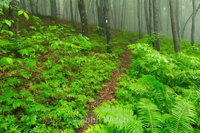 Green Tunnel of the Vermont Appalachain Trail - Vermont & Long Trail