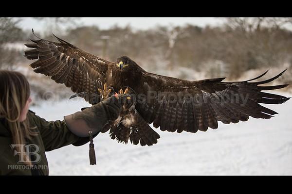 WoW jan-83 - Birds of Prey