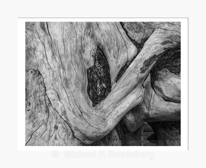 Driftwood Form 42, Rialto Beach, WA (2014/D00642) - Pacific Coast