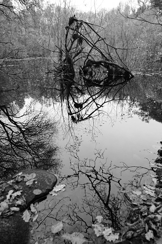 - Woodland