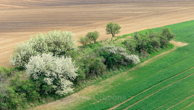 green and brown2 - Moravia